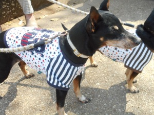 Dogs in t-shirts
