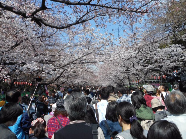 Crowd in Ueno Park